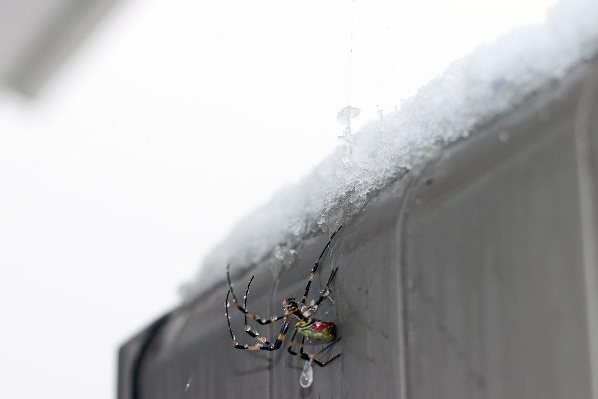 蜘蛛も凍るほどの寒波