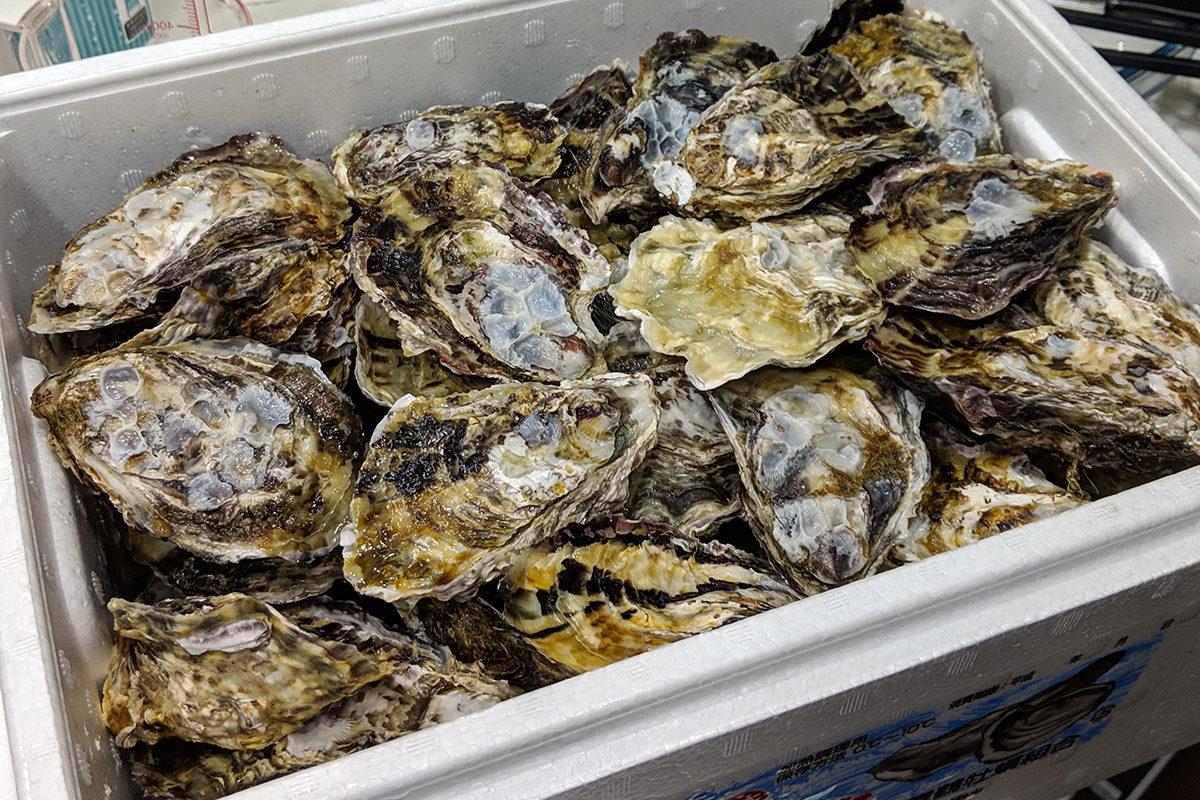 舞鶴の美味しい食材 真牡蠣