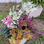秋の寄植え