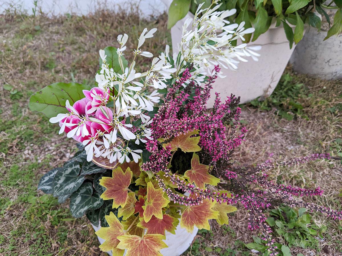 4回目 48歳のおっさんが寄植えに挑戦したらこうなった!ガーデニング歴半年 秋の草花で楽しむガーデニング