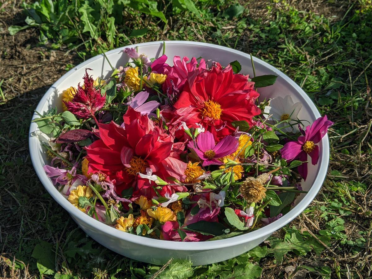 お花の世話
