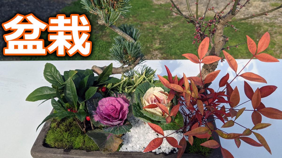 ガーデニング初心者が初めて盆栽に挑戦 正月の盆栽寄植えに挑戦します 森本隆ののんびりガーデニング