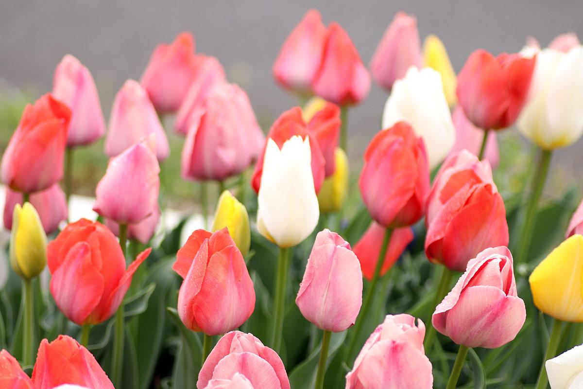 【お花増殖中】株式会社DIY STYLE のお庭を見てください このお花たちは社長(森本たかし)が一人で育てています ガーデニング日誌2021年4月12日