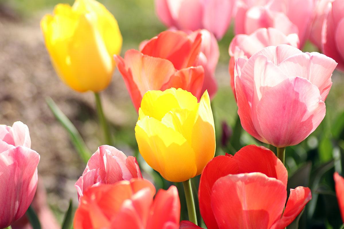 マクロレンズでお花を撮影しました このお花を育ててるのはおっさん(笑) ガーデニング日誌2021年4月12日