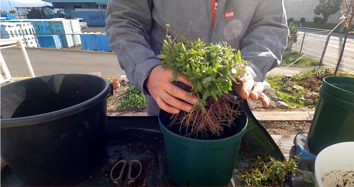 秋に植えた草花たちを春用に植え替えしました ガーデニング日誌2021年3月22日
