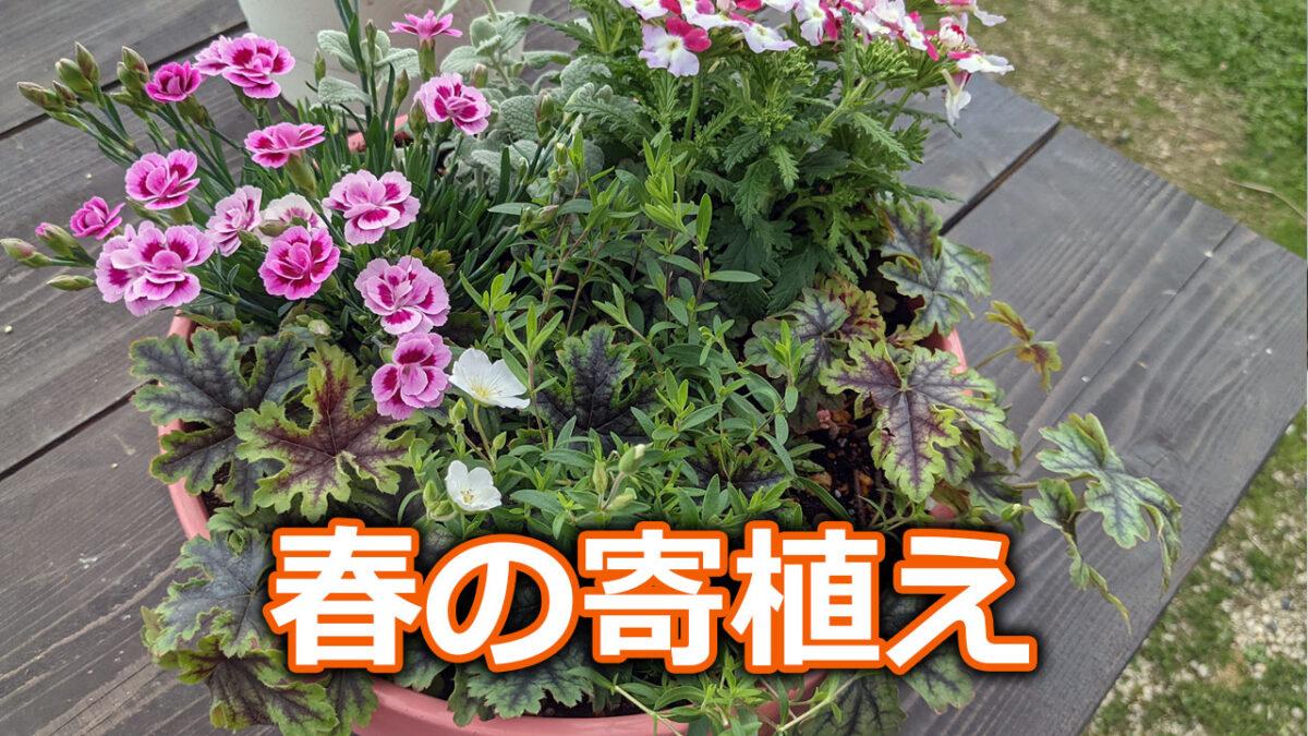 春の寄植え DIYで作ったピンクの素焼き鉢に植え込みました ガーデニング日誌2021年4月8日